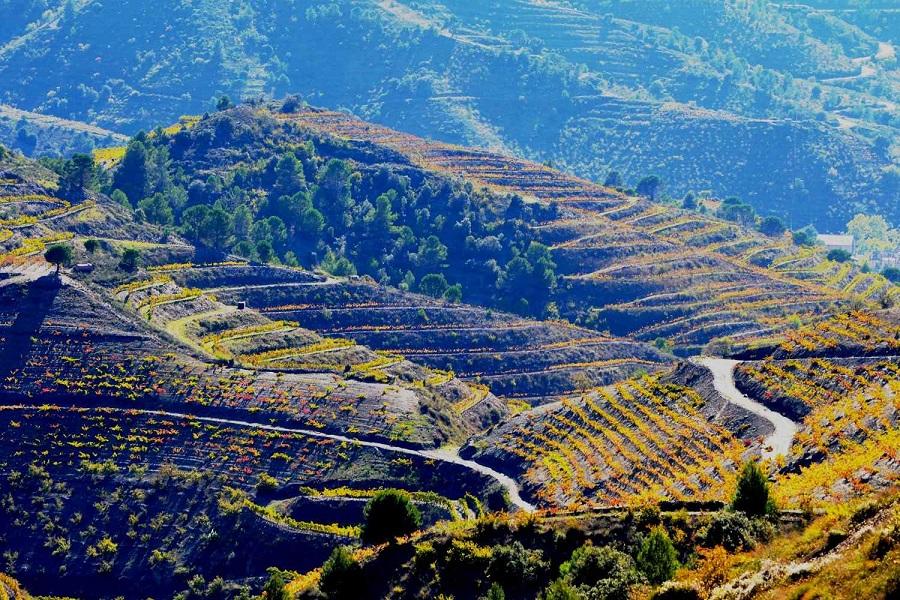 фото виноградников Приората