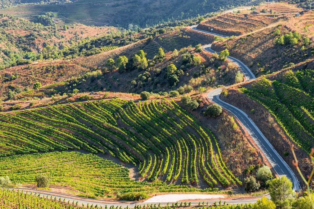 фото виноградника Приората