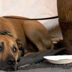 водка от чумки для собак
