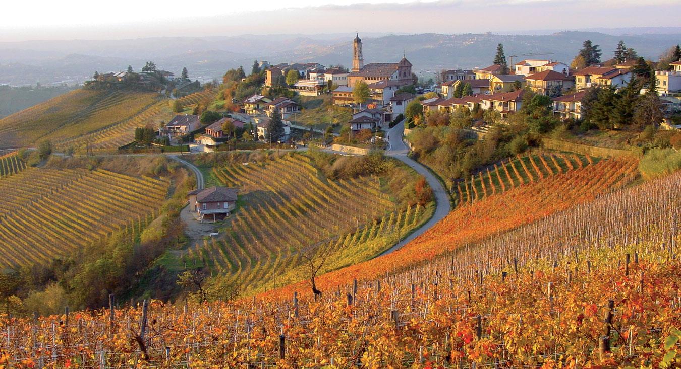 фото виноградников Барбареско