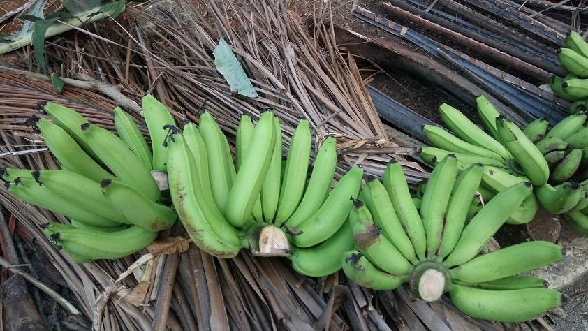 бананы для производства Пизан Амбон