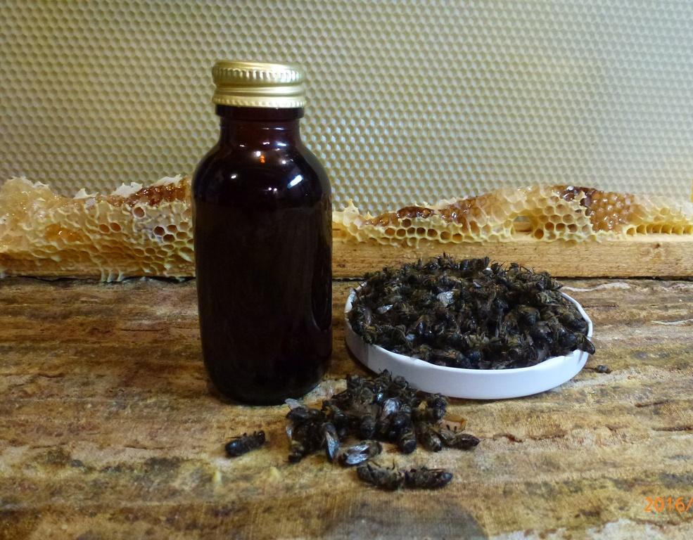 фото домашней настойки пчелиного подмора на водке