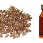 Настойка пчелиного подмора на водке – рецепт и применение