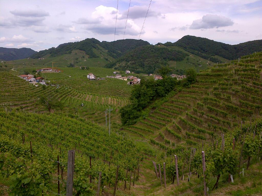фото платнации винограда в Каталонии