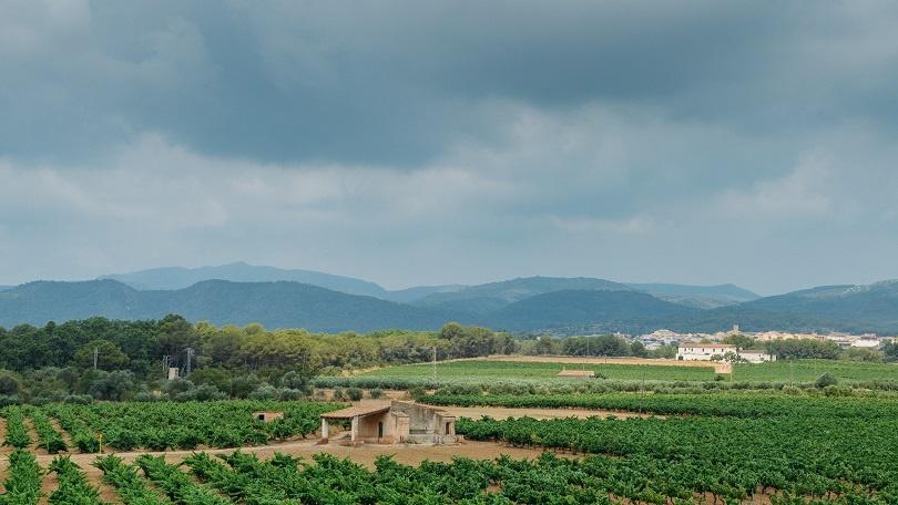 фото виноградника в Каталонии