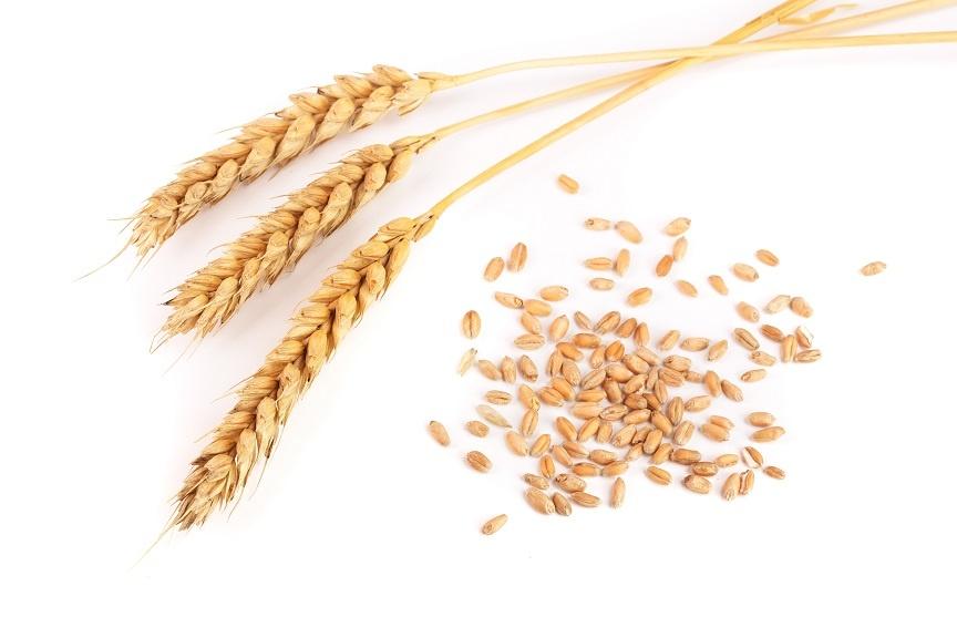 несоложеная пшеница для пива