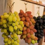 фото сортов винограда для вина