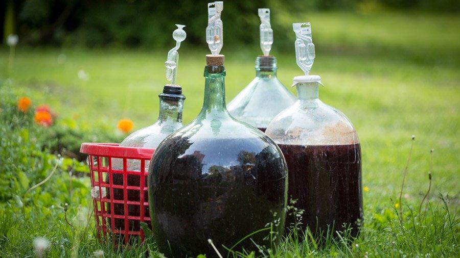 фото брожения вина из молодых грецких орехов