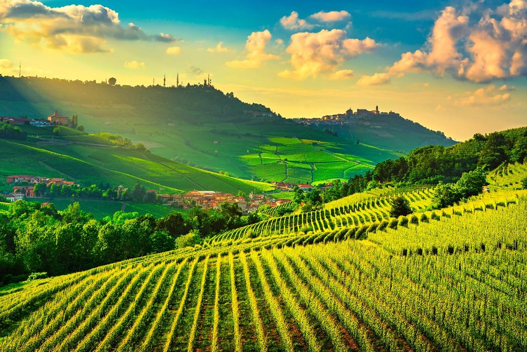 фото виноградников Москато