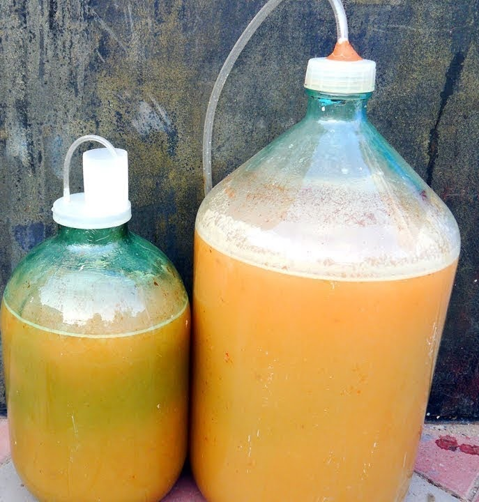 фото брожения вина из яблочного сока под водяным затвором