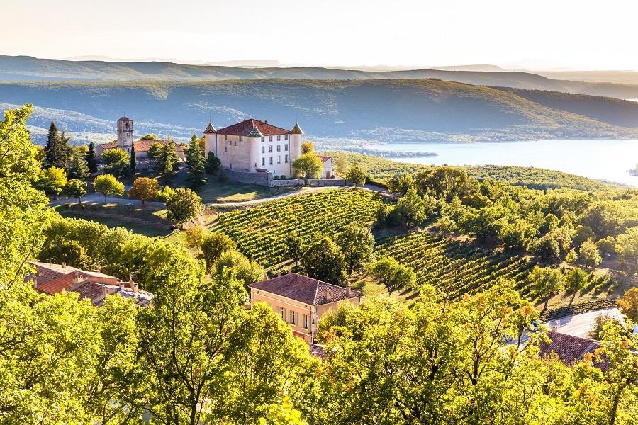Виноградник Прованса фото