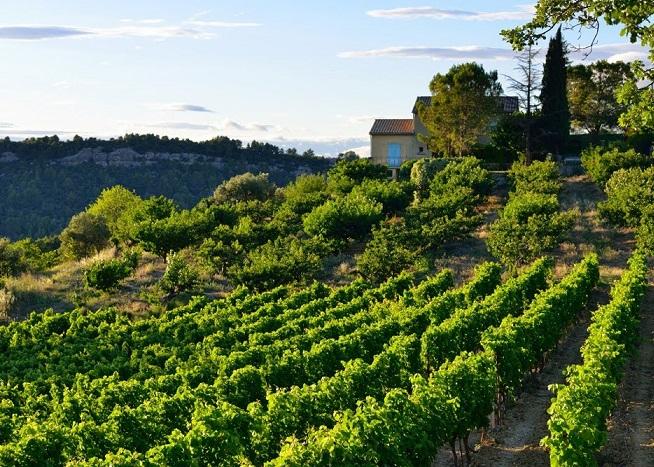 фото виноградников Прованса возле Кассис