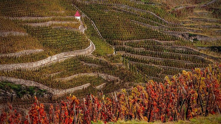 фото виноградника из долины Роны
