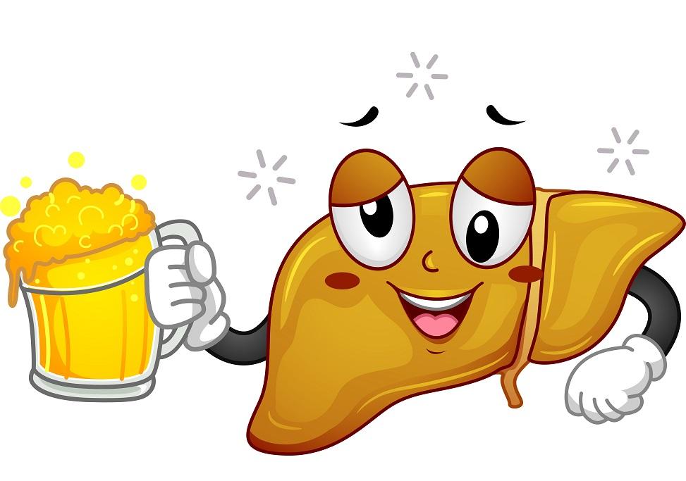 алкогольл и печень