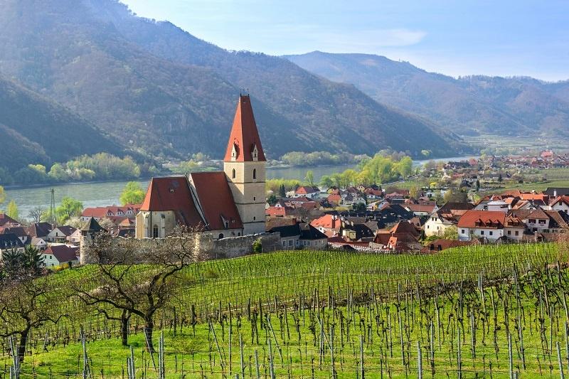 виноградник в Австрии