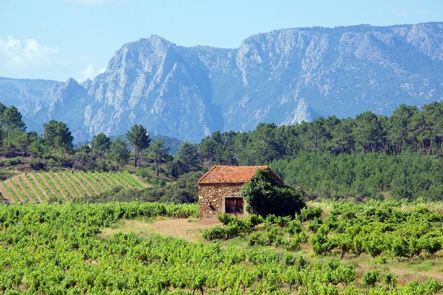 фото виноградника Лангедока