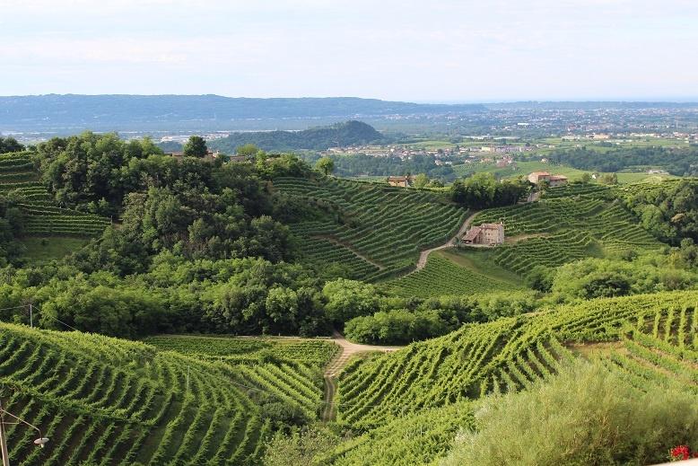 фото виноградника Гави