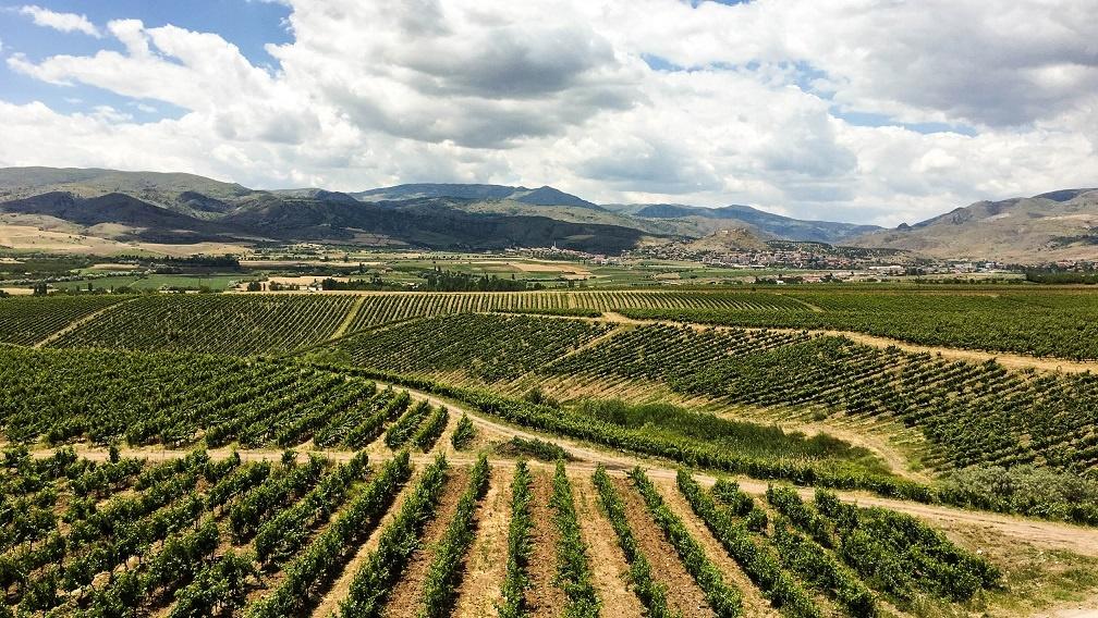 виноградник в Турции
