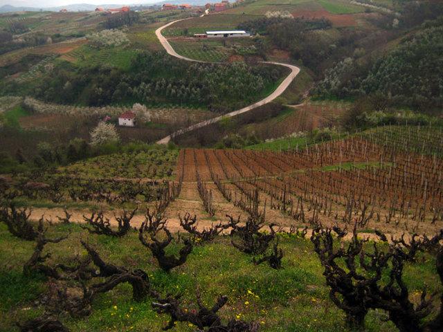 виноградник Кадарка