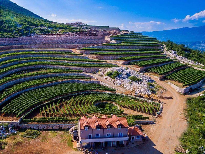 виноградник в Черногории