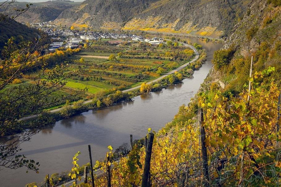 виноградник возле реки Мозель