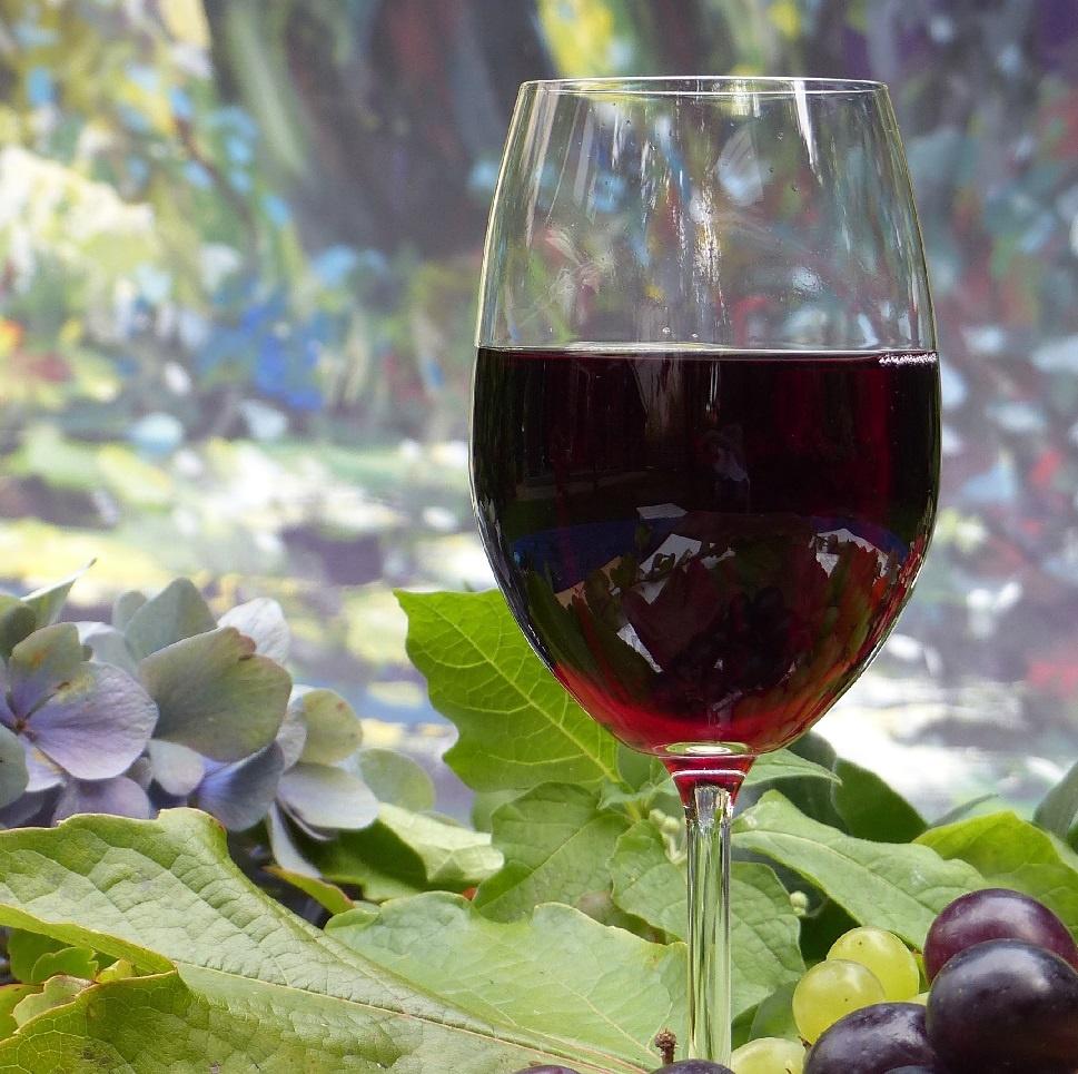 самое танинное вино фото