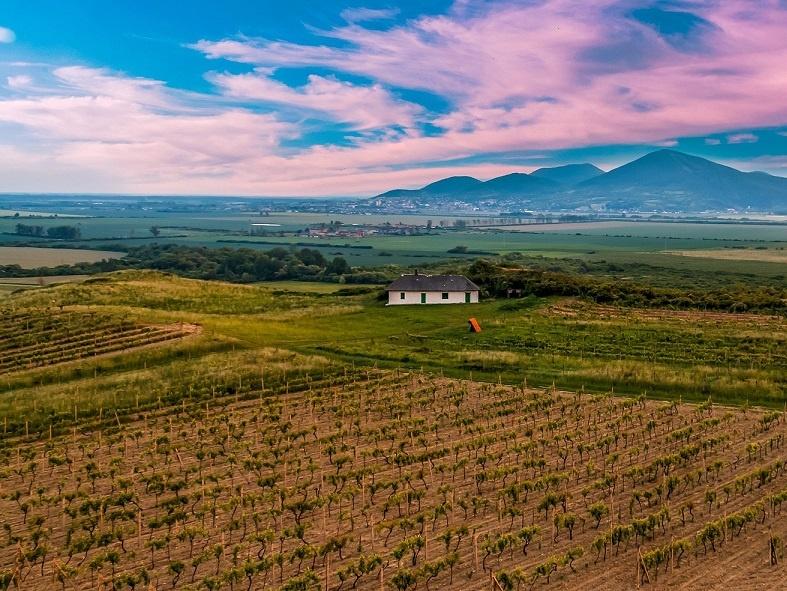фото венгерского виноградника